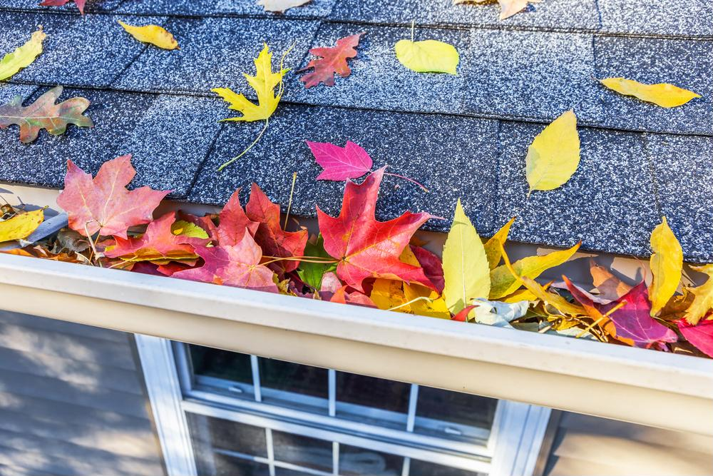 Why Fall Is Still a Good Time For Homebuying [Video]