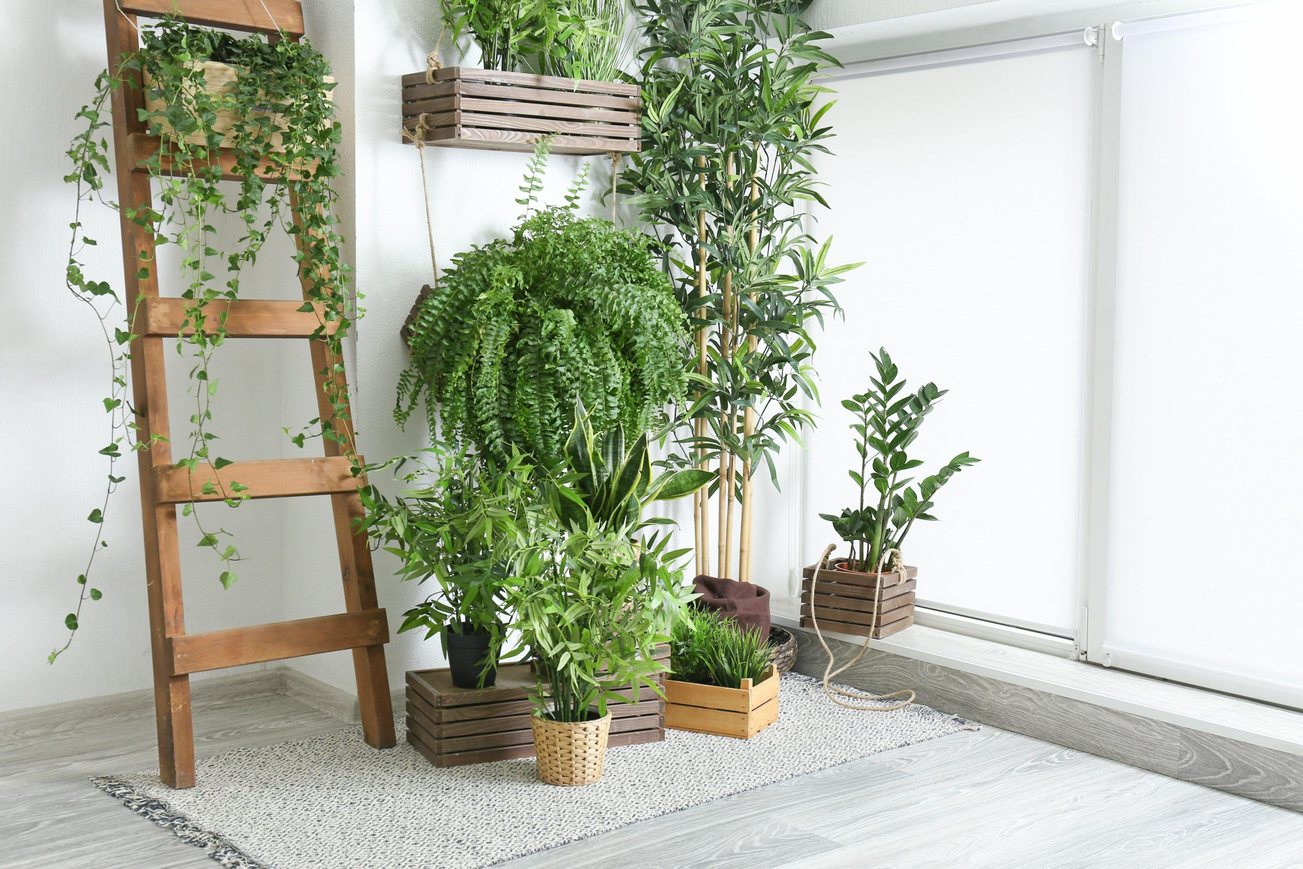 houseplants for cleaner air first centennial mortgage