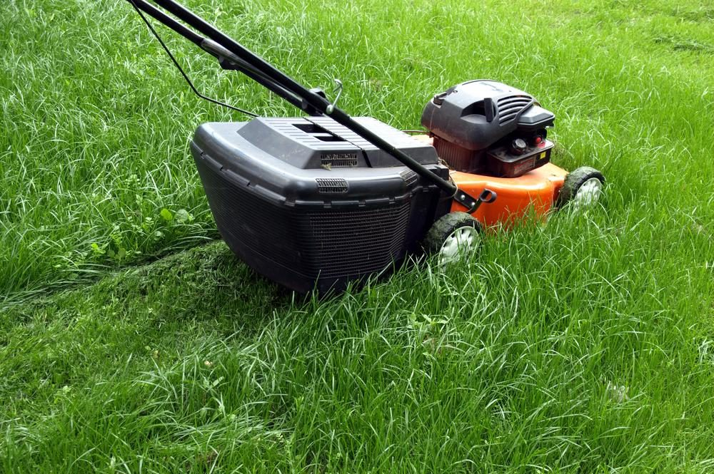 What to Look for in a Lawn mower