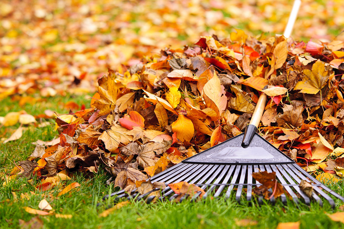 lawn maintenance tips your fall lawn care and landscaping checklist